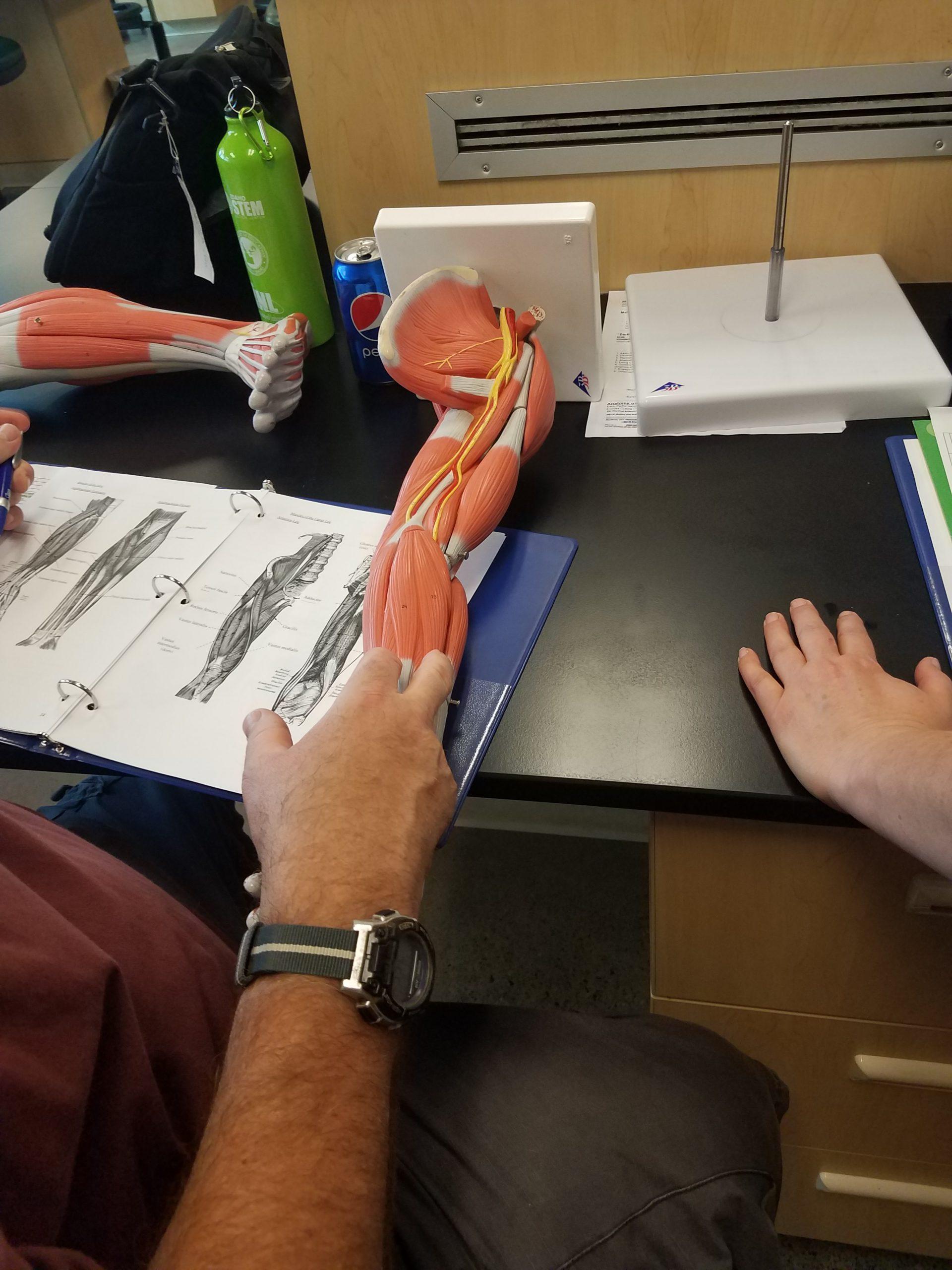 Human Biology Strand